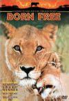 film lejonet elsa f 246 dd fri 2 lejonet elsa blir stor filmpunkten