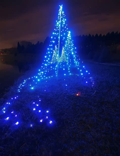 blue lights christmas tree free stock photo public