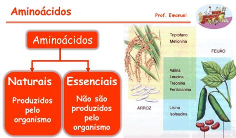 proteinas e vitaminas biologia lip 237 dios prote 237 nas e vitaminas