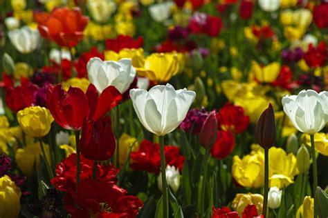 flores de jardin 191 c 243 mo y cu 225 ndo plantar flores de jard 237 n mi jard 237 n