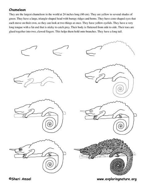 How To Draw A Chameleon Easy