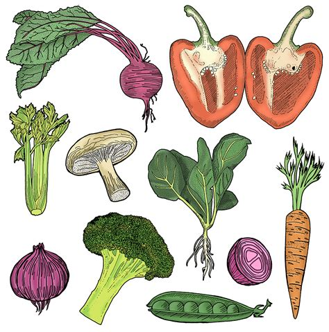 Drawing Vegetables by Fruit And Fast Food Detailed Drawings