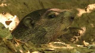 groundhog day xplor groundhog day vidinfo