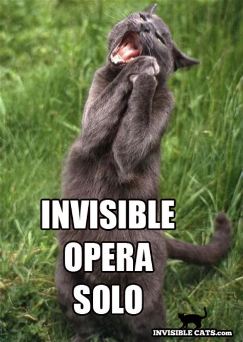 Invisible Cat Meme - invisible cat on pinterest cat toys cat memes and cats