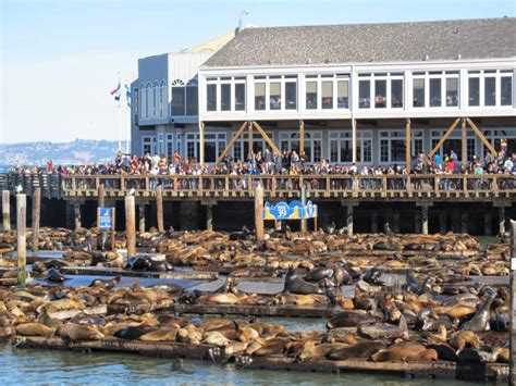 San Francisco Address Search Fishermans Wharf Walking Tour With Alcatraz
