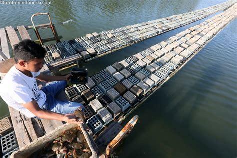 Tempat Tisu 161 petani memanen kepiting sangkak kepiting lunak di tempat