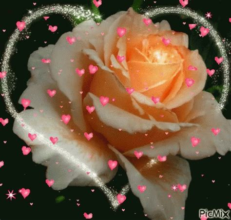 gif wallpaper for macbook flower animation gif flower animation discover share