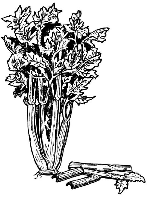 celery coloring pages download and print celery coloring