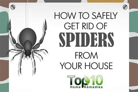 how to get rid of chiggers in your bed 17 best images about bugs insects crawling things on