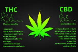 cannabinoids benefits of thc and cbd grass logic