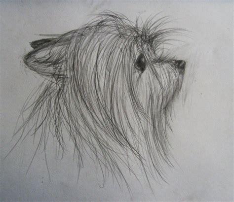drawings of yorkies yorkie by chemukh ayet on deviantart