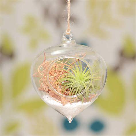 hanging glass heart vase air plant terrarium by dingading