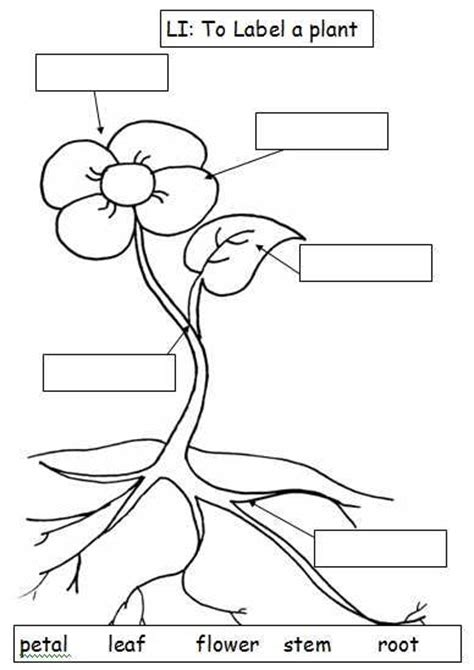 label flower diagram i used this along with teaching functions of a plant to