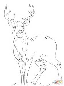 coloring pages white tailed deer search