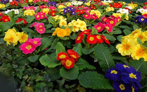 piante e fiori pompei sequestro di fiori e piante radio marte