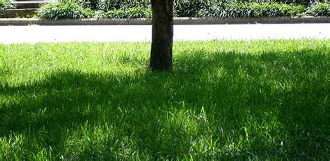 how to grow grass in backyard how to grow grass in shade today s homeowner