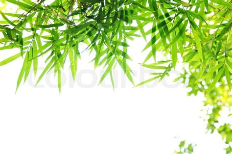 Home Decor Wiki by Green Bamboo Leaf Background Border Design Stock Photo