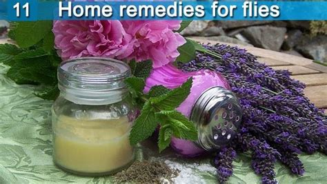 11 home remedies for flies in house and outside