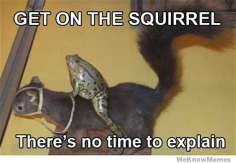 No Time To Explain Meme - get on the squirrel theres no time to explain weknowmemes