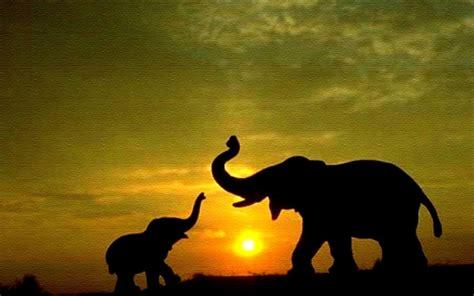 abstract elephant wallpaper hd baby elephant wallpapers hd desktop wallpapers 4k hd