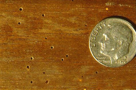 signs of bed bugs in wood furniture 8 telltale termite signs to look out for pest hacks