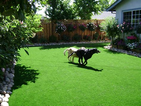 how to keep dogs lawn how to keep clean run areas synthetic artificial grass in bay area california
