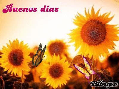 imagenes de buenos dias amor con girasoles buenos dias girasol fotograf 237 a 48081430 blingee com