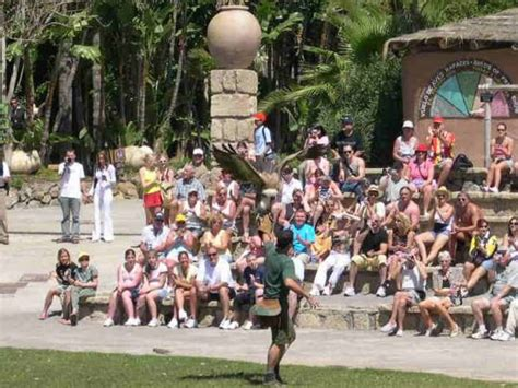 theme park tenerife jungle park tenerife theme parks destination tenerife