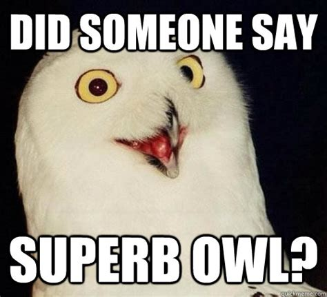 Superb Owl Meme - superb owl memes quickmeme