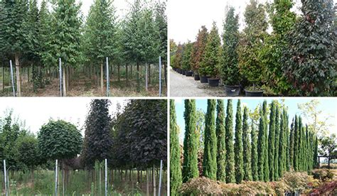 piante da giardino alto fusto piante alto fusto giardini fantareali