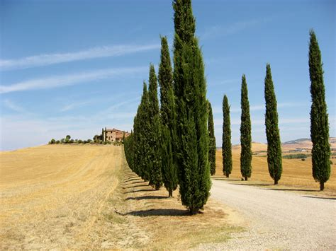 F 225 Jl Val D Orcia Landscape 1 Jpg Wikip 233 Dia C And D Landscaping