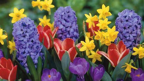 fiori da giardino primaverili fiori primaverili fiori di piante tipologie fiori
