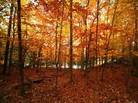 Autumn Wallpapers For Desktop Free Images Fun