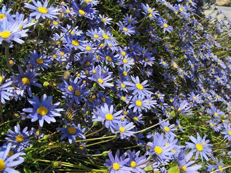 piante perenni fiorite piante perenni piante da giardino piante perenni arbusti