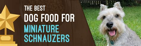 best food for miniature schnauzer puppy miniature schnauzers food ratings