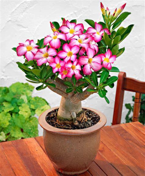 piante da appartamento cura piante da appartamento come prendersene cura casanoi