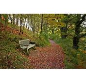 Wallpaper Autumn Forest Leaves Bench Shop Path Images