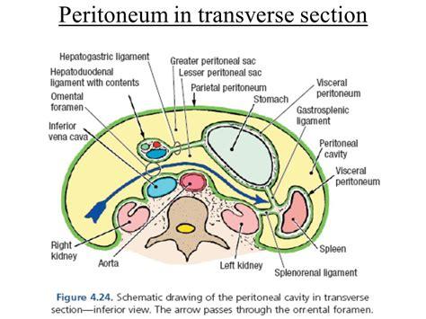 peritoneum ppt