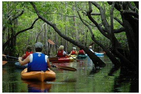10 Cool Attractions In Florida by Paddle The Wakulla River With Manatee Picture Of