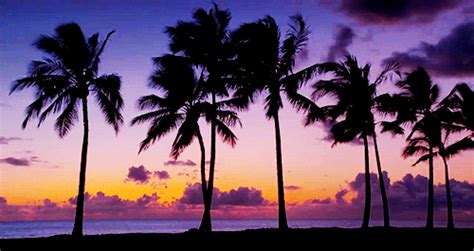 jak zmienic format gif na png palm trees beach gif find share on giphy