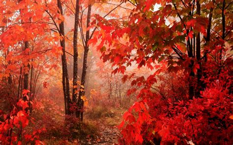 red leaves beautiful fall landscapes hd wallpapers hq