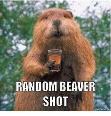 Beaver Meme - 25 best memes about beaver shot beaver shot memes