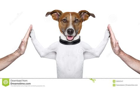 puppy high five high five royalty free stock photography image 30253147