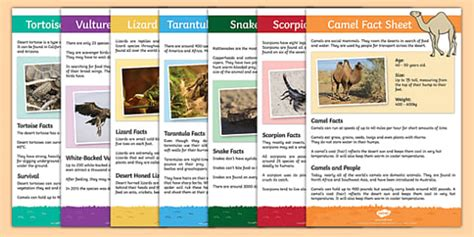fact card template ks1 meerkat mail desert animals desert animals fact