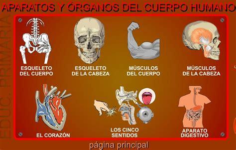 imagenes educativas cuerpo humano aparatos y 243 rganos del cuerpo humano didactalia