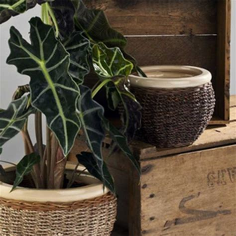 Indoor Planters For Sale by Pots And Planters For Sale