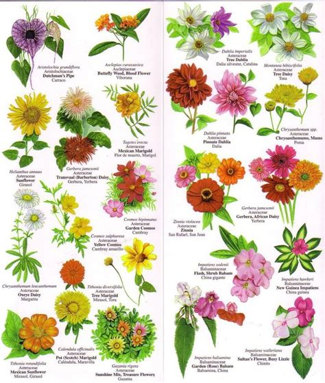 Flowers Chart With Names In English 195410 1 Jpg Vintage Names And Pictures Of Garden Flowers