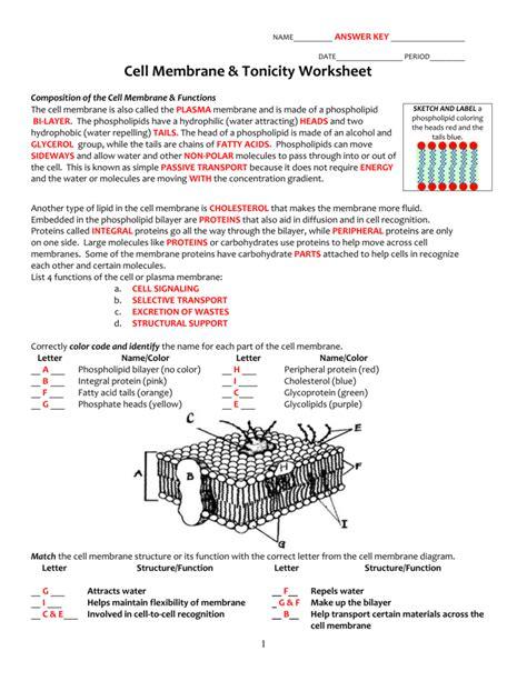 image result  cell membrane worksheet education