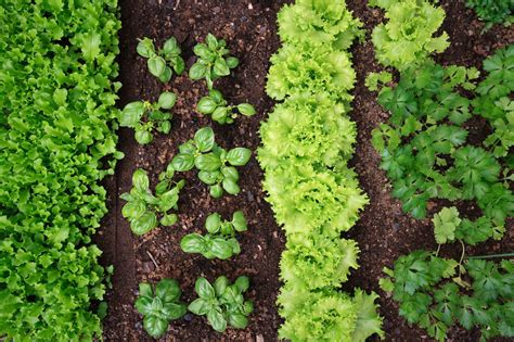 What To Plant In A Small Vegetable Garden Plant Incompatibility What Plants Should Not Be Planted