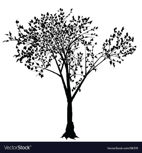 Tree Silhouette Royalty Free Vector Image Vectorstock Ancestry Stock Images Royalty Free Images Vectors